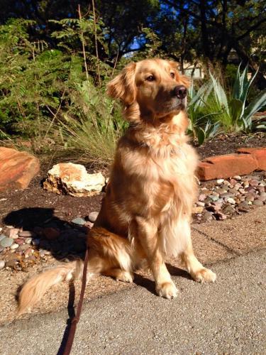 Ashley Martin Austin Pet Sitters Organization